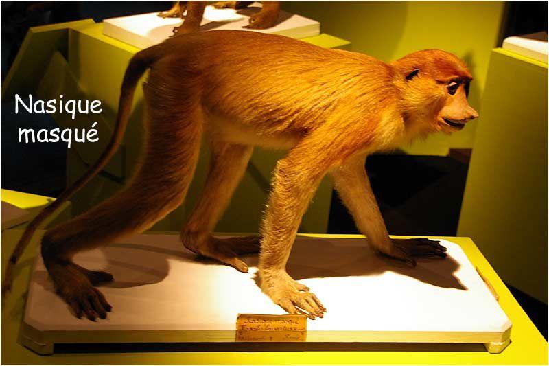 """Photos réalisées au cours de la visite de l'exposition """" quel avenir pour les grands singes """""""