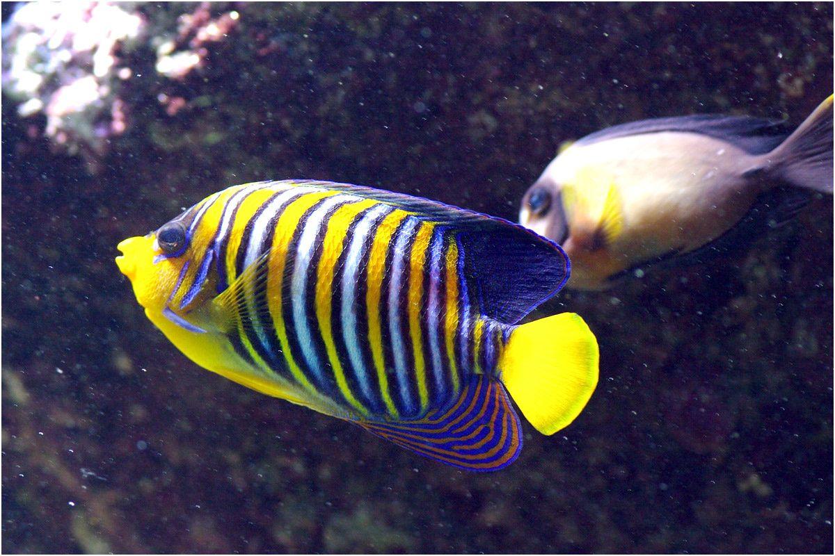 Parc Océanopolis de Brest. Les poissons et coraux du pavillon tropical.
