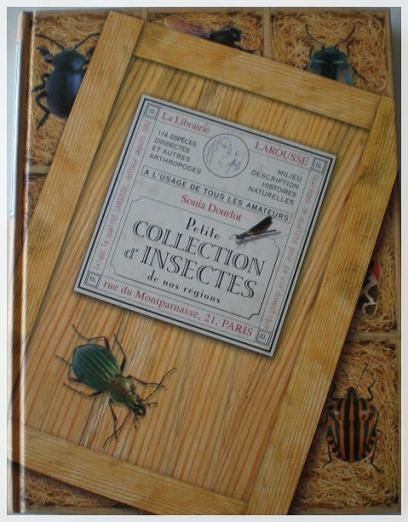 Petite collection d'insectes (1)