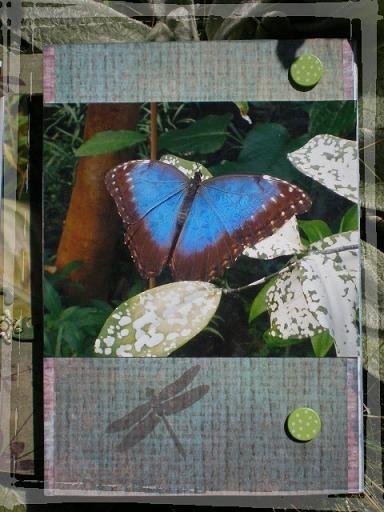 album papillons exotiques (6)