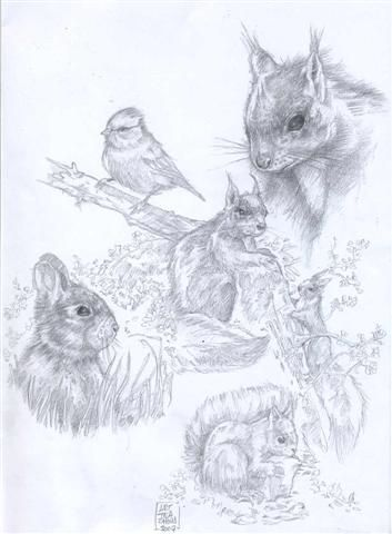 squirrels-co1.1--Small-.jpg