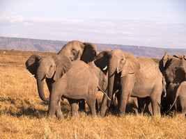 m-075-elephants.jpg