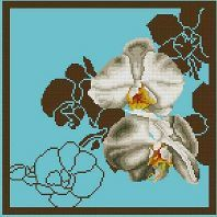 Orchid-4-fond-turquoise-SM.jpg
