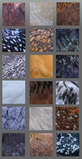 couleurs-orpington-palette-site.jpg