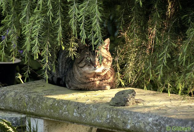 chat-jardin-blog