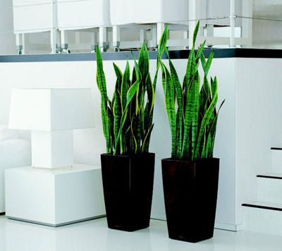 Meubles et deco tout le design for Pot de plante design