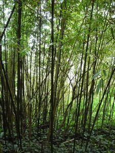 foret-de-bambous.jpg