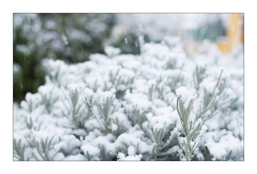 16 Janvier 2013 Neige à la maison (35)