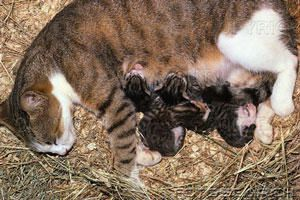 how to catch a feral mom and kittens
