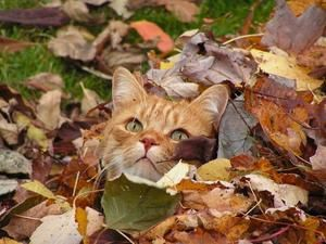automne-feuilles-autres-animaux-thetford-mines-canada-381585956-895204.jpg