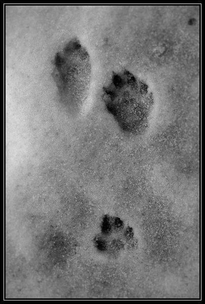 causses-0042-border.jpg