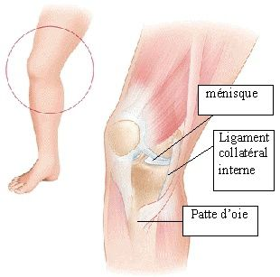 douleur tendon interne genou