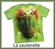 ANIMAL INSECTES FAMILLE