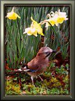 avatar-printemps.jpg