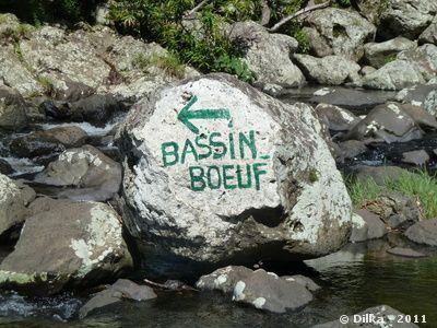 bassin-boeuf