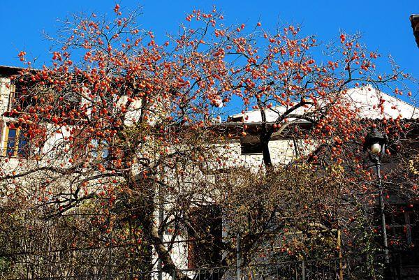 novembre-2009-0059.JPG