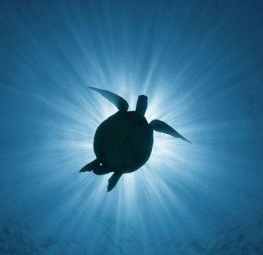 turtle-eclipse