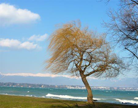 bis arbres