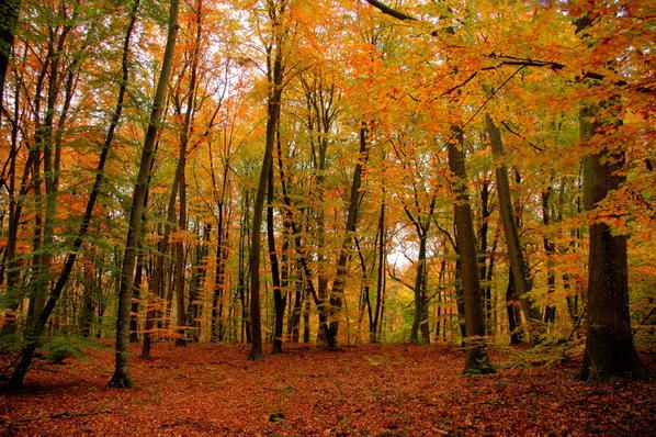 foret-fontainebleau.jpg