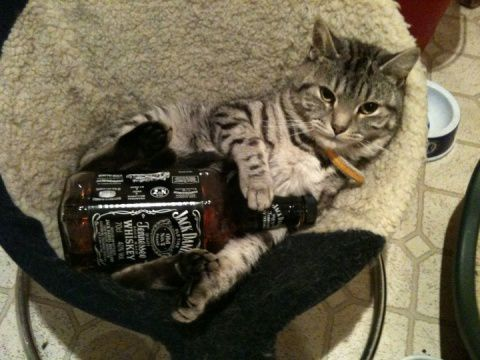 whisky-cat.jpg