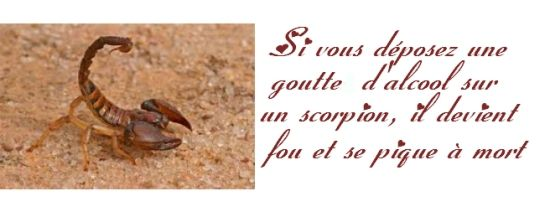 Scorpion-copie-1