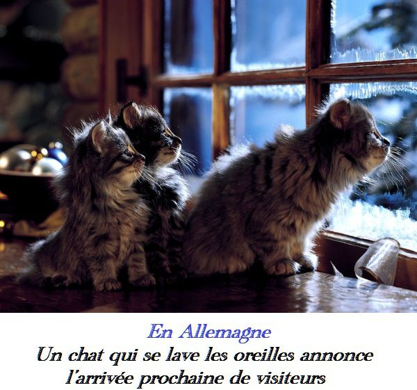 chat superstition 1