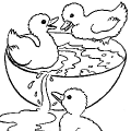 coloriage canard,coloriages canards,canetons,coloriages canetons,animaux de la ferme,coloriage animaux de la ferme,tibous,tibou