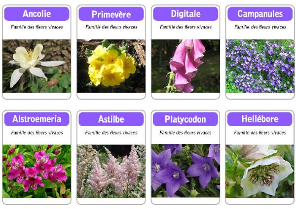 apprendre les fleurs,jeu pour apprendre les fleurs,jeux pour decouvrir la nature,jeux educatifs,jeu jardinjeu pour les petits,tibou,tibous,photos fleurs, ancoloies,primevere,digitale,hellebore,astilbe