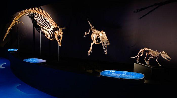 incroyables cétacés, museum histoire naturelle