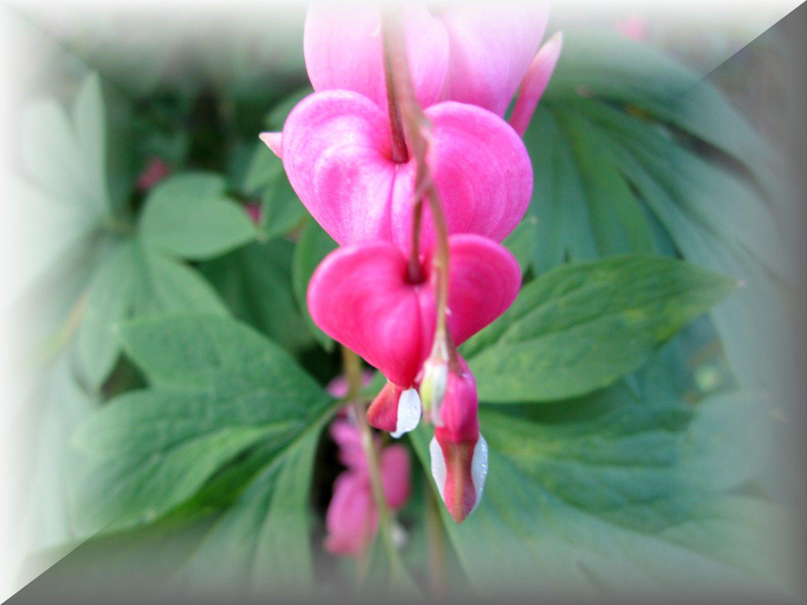Quelques fleurs de mon jardin au fil des saisonsJe vous souhaite une bonne promenade