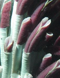 tubeworms chemosynthesis Index/satal 2010 let's make a tubeworm (adapted from the 2002 gulf of mexico expedition) focus hydrothermal vent ecosystems n students will be able to describe the process of chemosynthesis in general terms, and contrast chemosynthesis and photosynthesis.