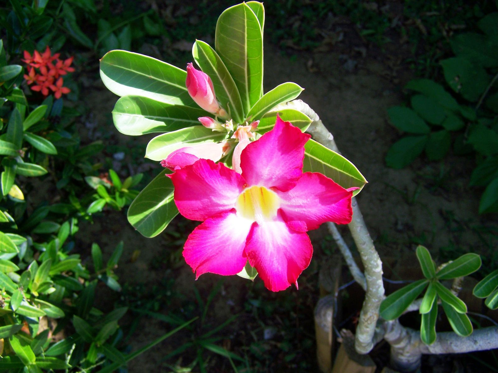 Quelques photos des fleurs de notre jardin
