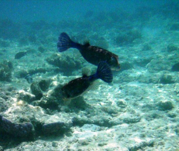 Photos d'amateur prises lors d'un séjour snorkeling à l'hôtel Gorgonia beach de Marsa Alam (Egypte)