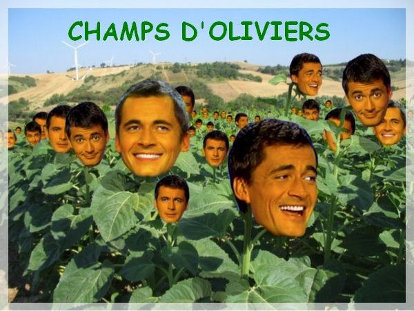 champs-d-oliviers.jpg