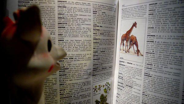 La quête identitaire de la giraphe Sophie