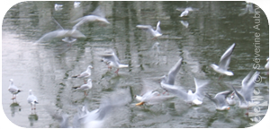 mouettes2