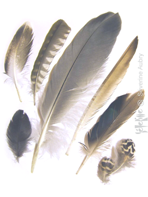 plumes1-
