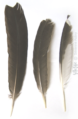 plumes3-