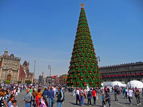 giant_tree_zocalo.jpg