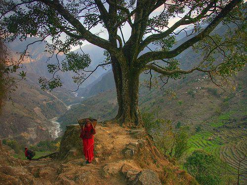 458520625-my-porter-nepal.jpg