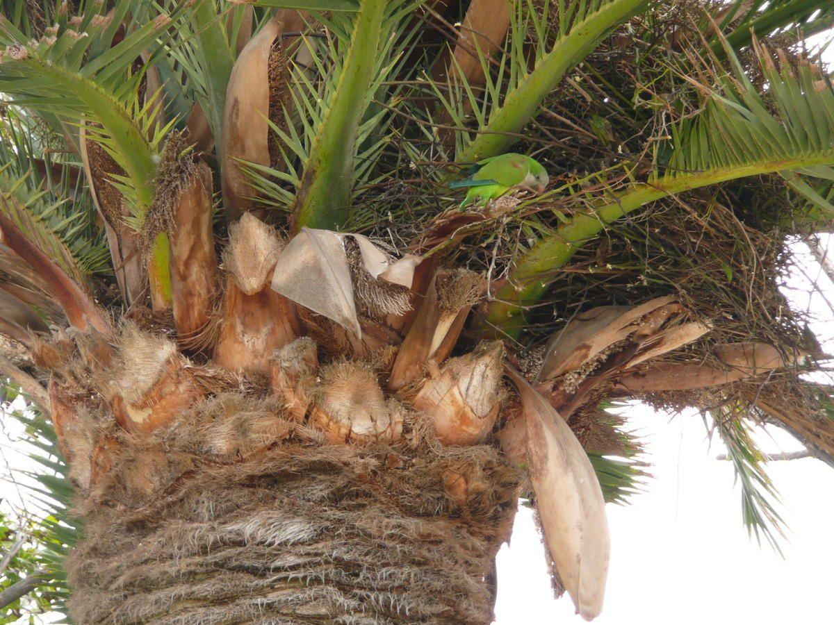 Parc-de-la-Citadelle---nid-de-perroquets