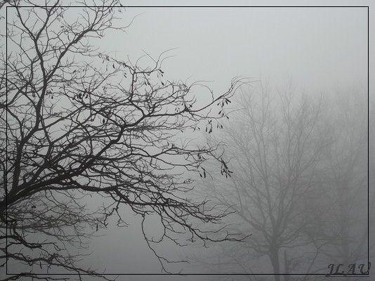 brouillard2.jpg