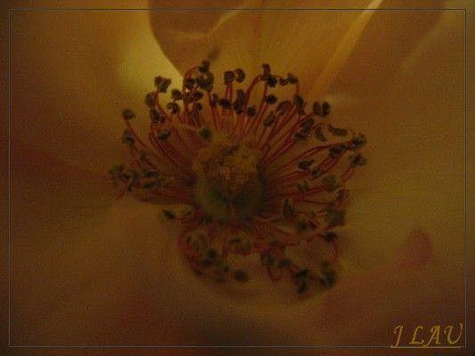 fleurs--2-0001.JPG