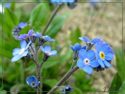 fleurs-0032.JPG
