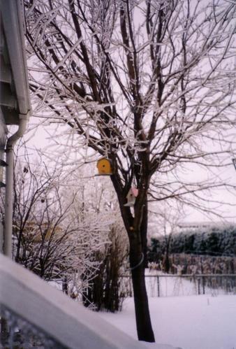 Verglas-1998--3-.jpg