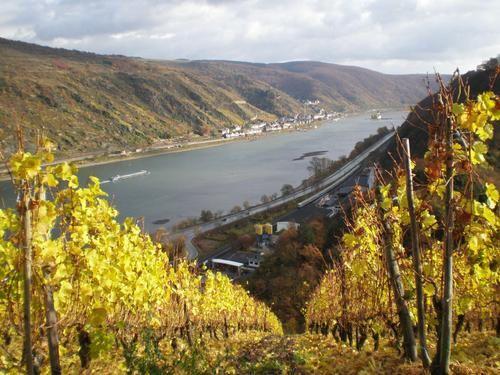 Oberwesel--les-vignes-du-Seigneur--PB061247--r--duit----20-.JPG