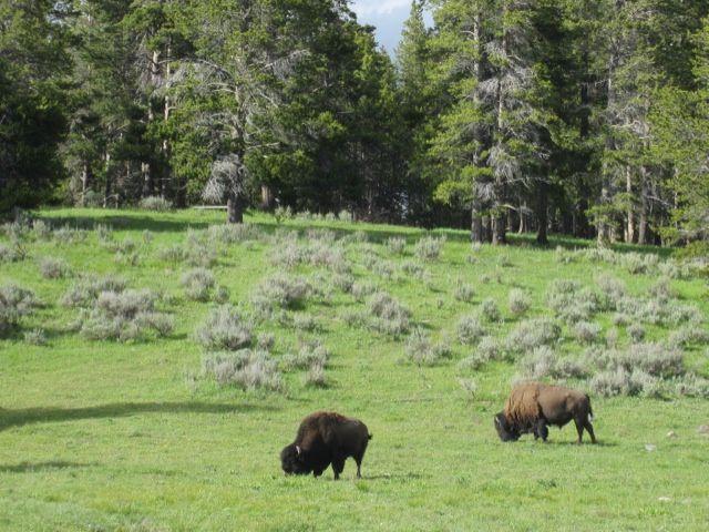 C-Yellowstone 6050S