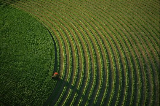 agriculture-253032.jpg