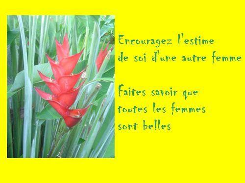 fleur15.jpg