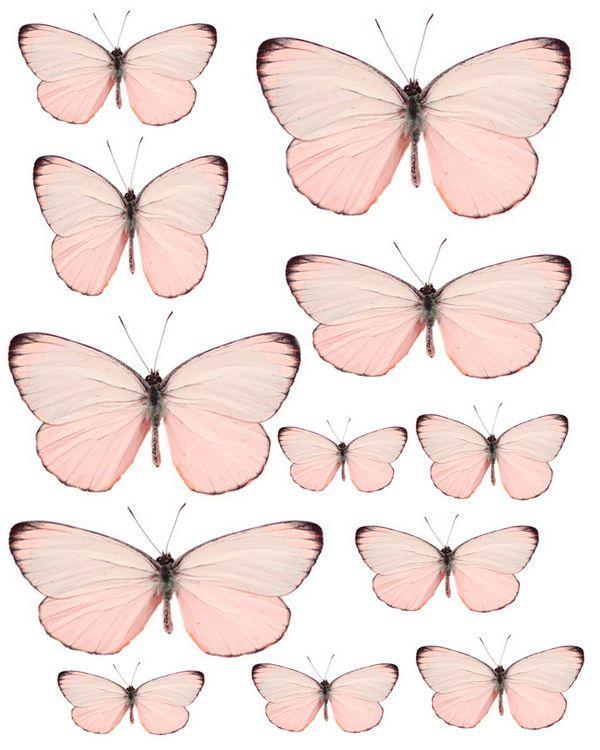 1328109583_55_FT838_pale_pink_butterflies_.jpg